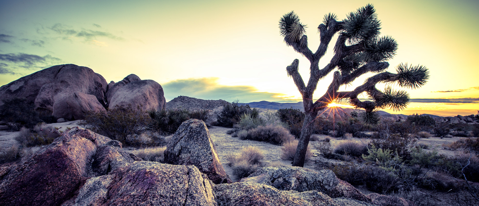 Joshua tree sunrise in desert